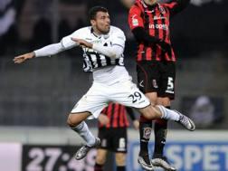 ndrea Petagna, 20 anni, attaccante attualmente all'Ascoli. LaPresse
