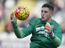 Pierluigi Gollini, 20 anni, portiere dell'Hellas Verona