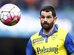 Sergio Pellissier, ancora decisivo per il Chievo. LaPresse
