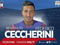 Federico Ceccherini, 24 anni