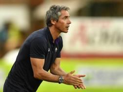 Paulo Sousa, seconda stagione alla Fiorentina. LaPresse