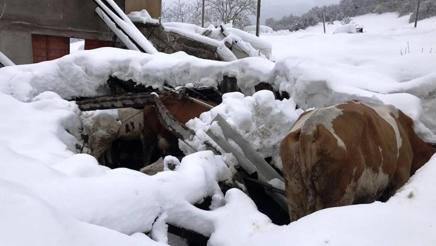 Una stalla crollat a dopo una delle scosse di oggi. Ansa