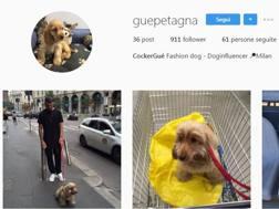 Il profilo Instagram del cane di Petagna...