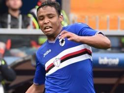 Luis Muriel, attaccante colombiano della Sampdoria. Getty