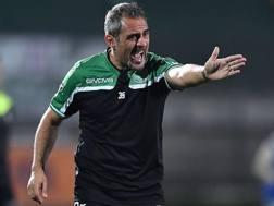 Domenico Toscano, 45 anni, ha iniziato la stagione in serie B, sulla panchina dell'Avellino. LaPresse