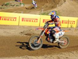 Herlings in azione