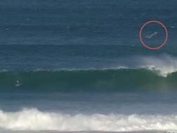 Nel cerchio rosso l'enorme squalo comparso fra le onde