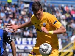Andrea Favilli, 8 gol la scorsa stagione con l'Ascoli. Lapresse