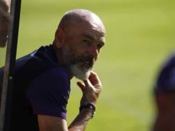 Stefano Pioli, 51 anni, allenatore Fiorentina. ANSA