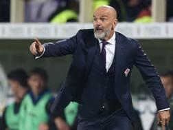Stefano Pioli, allenatore della Fiorentina da questa stagione. Getty Images