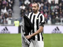 Giorgio Chiellini, 13ª stagione con la Juventus. Getty