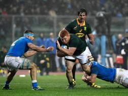 Sergio Parisse in azione col Sudafrica AFP