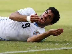 L'uruguaiano Luis Suarez a terra subito dopo il morso a Chiellini. Reuters