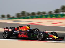 Daniel Ricciardo in azione sulla Red Bull. Getty