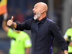 Stefano Pioli, allenatore della Fiorentina. Lapresse