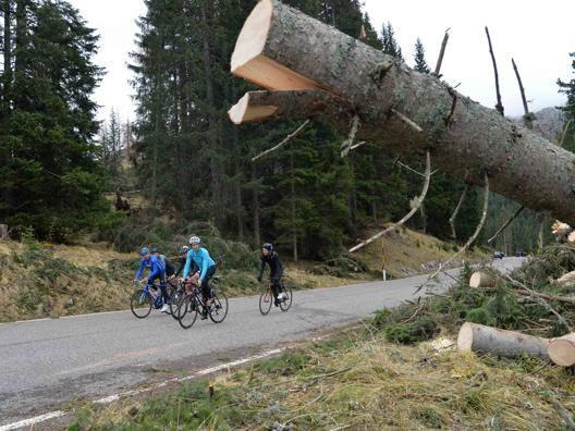 Il c.t. Davide Cassani nella Foresta di Paneveggio devastata dall'uragano. Fotoservizio di Daniele Mosna