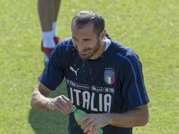 Giorgio Chiellini, 34 anni, ANSA