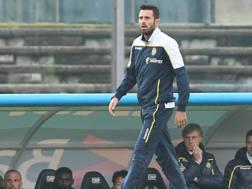 Fabio Grosso, allenatore del Verona. LaPresse