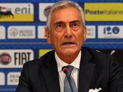 Gabriele Gravina, presidente della Figc. Getty