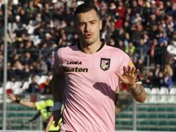 Ilija Nestorovski, 28 anni, attaccante del Palermo. LAPRESSE