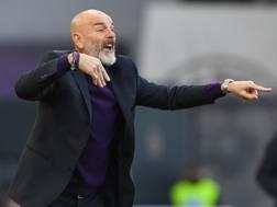 Stefano Pioli, 53 anni, tecnico della Fiorentina GETTY