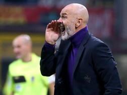 Stefano Pioli, allenatore della Fiorentina. Ansa