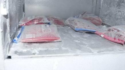 Le sacche di sangue conservate nel frigorifero di un garage