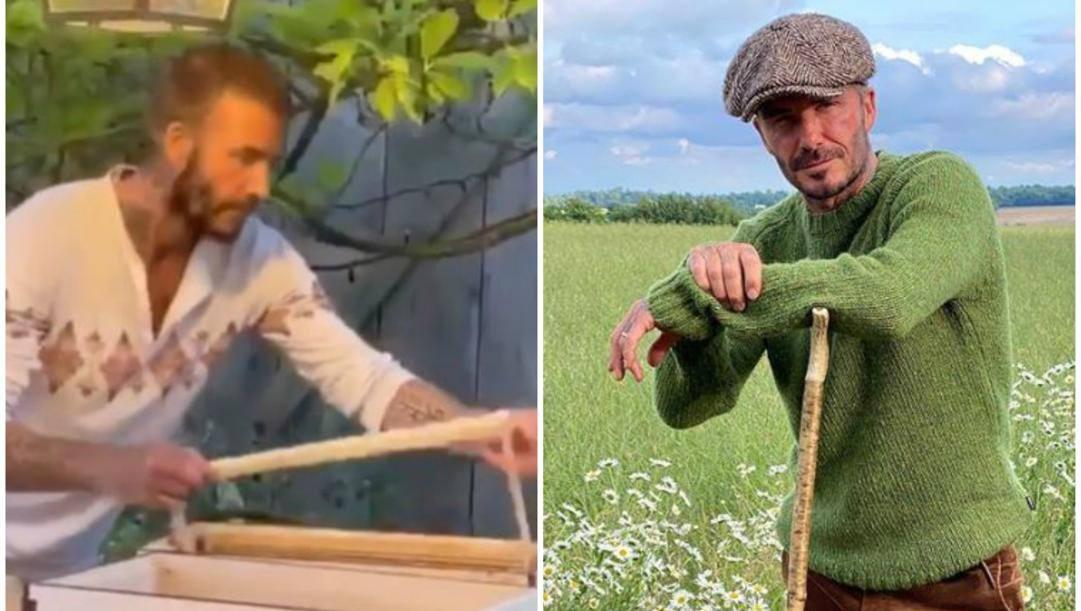 David Beckham (anche) in versione apicoltore