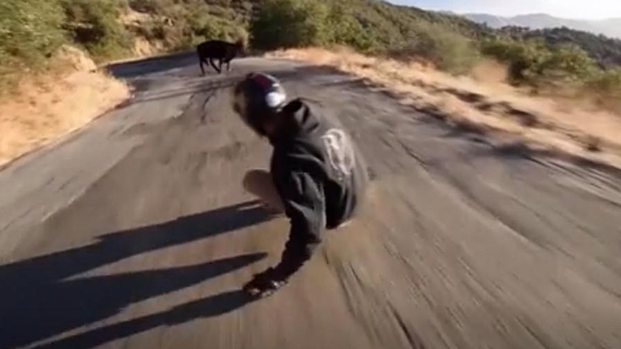 A 65 km/h sulla tavola, ma c'è la mucca...