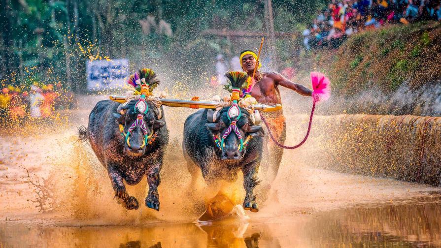 India, Gowda batte Bolt trainato dai bufali